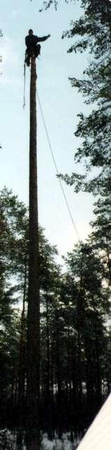 n-kosc-1999-640.jpg